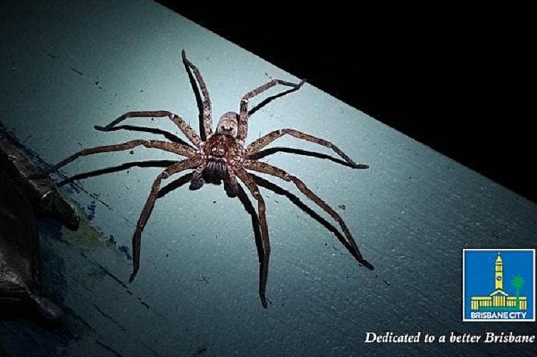 spider BCC night adventures