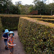 Bellingham Maze searching
