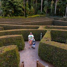 Bellingham Maze we made it