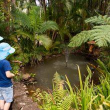 Bellingham Maze pond