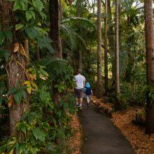 Bellingham Maze tropical walks