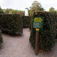 Bellingham Maze start of maze